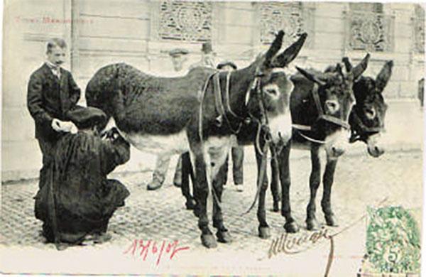 Carte postale - Traite d'ânesse sur la voie publique début XXème